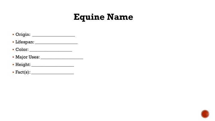 Equine Name