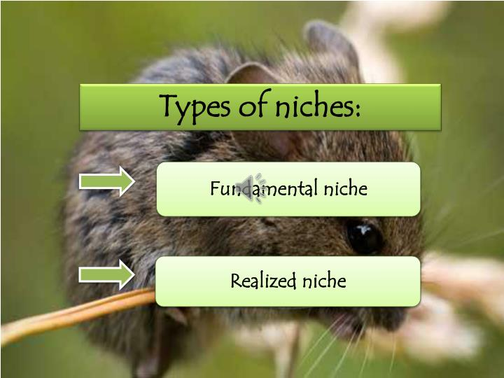 Types of niches: