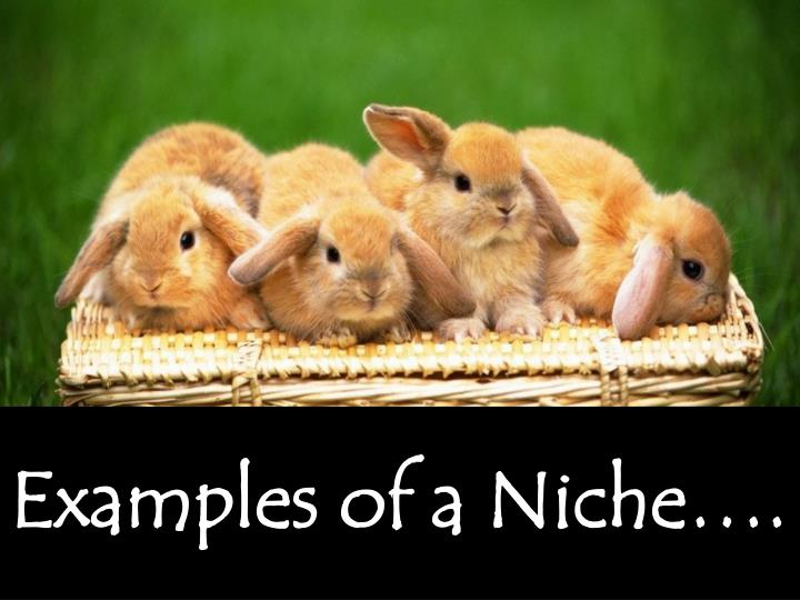Examples of a Niche….