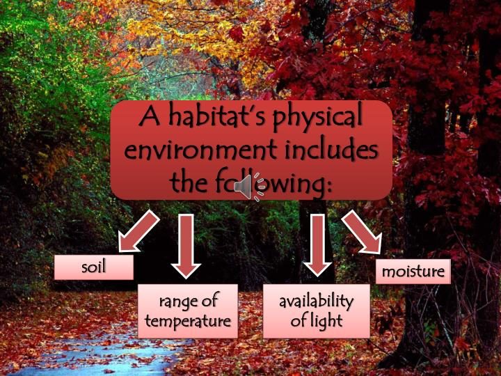 A habitat's physical environment includes the following: