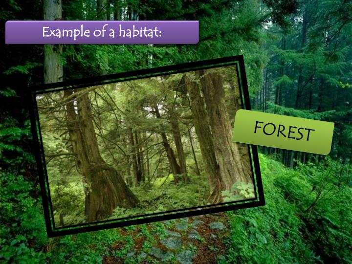 Example of a habitat: