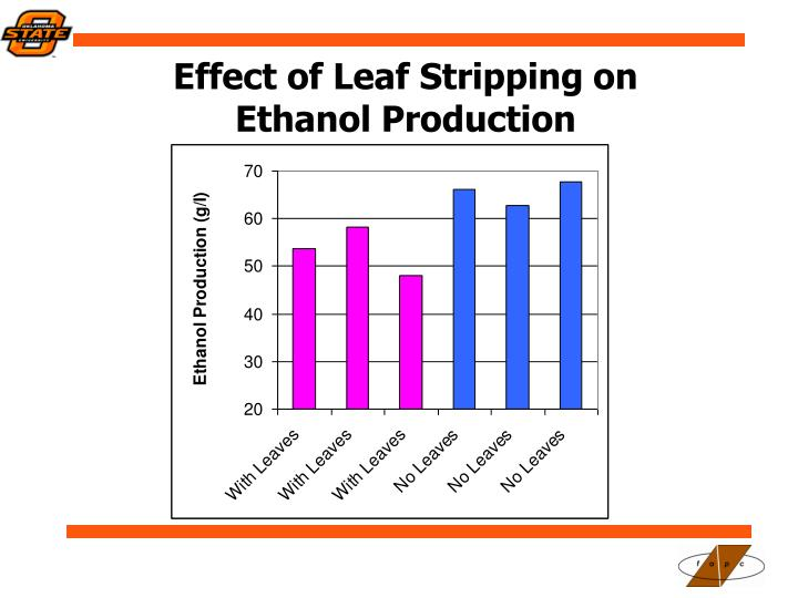 Effect of Leaf Stripping on