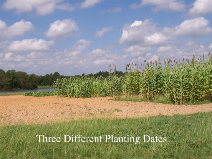 Three Different Planting Dates
