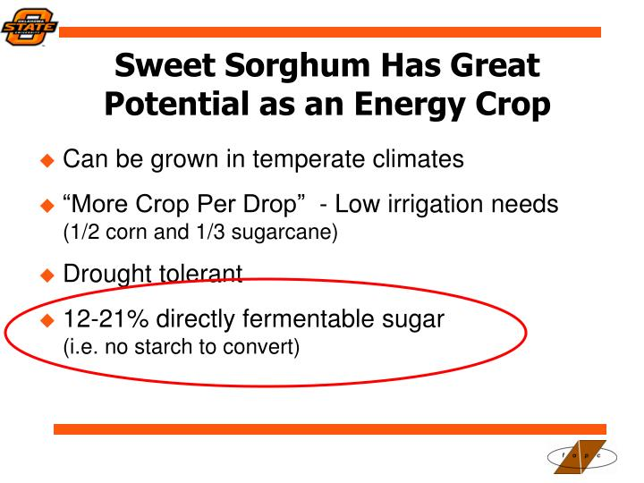 Sweet Sorghum Has Great Potential as an Energy Crop