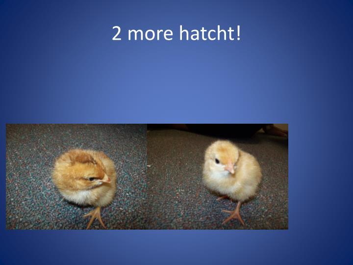 2 more hatcht!