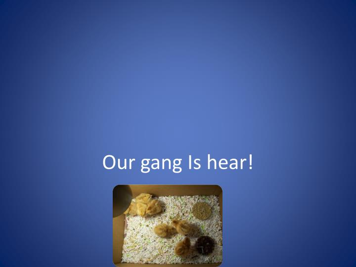 Our gang Is hear!