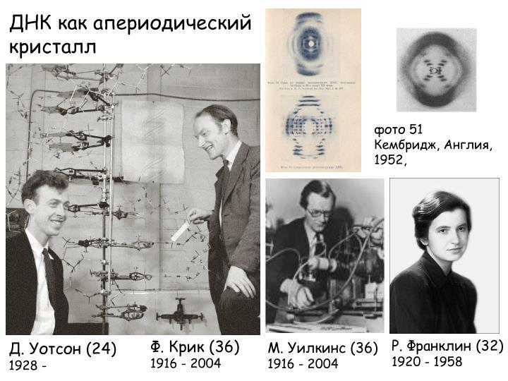 ДНК как апериодический