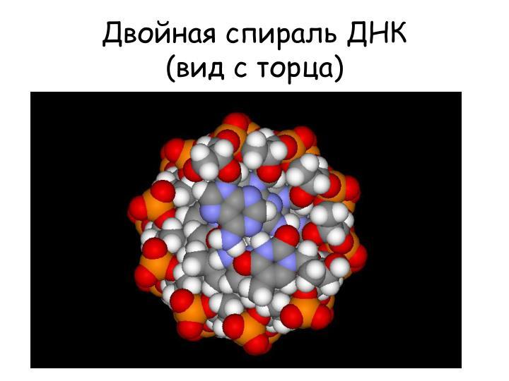 Двойная спираль ДНК