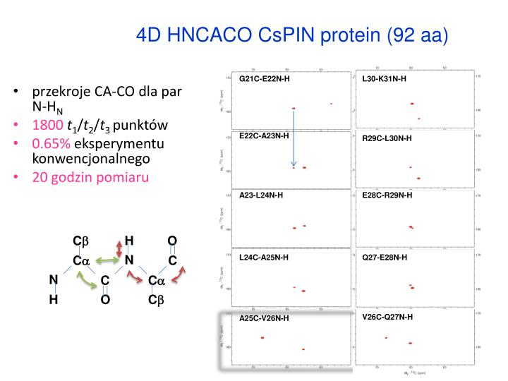 4D HNCACO CsPIN protein (92 aa)