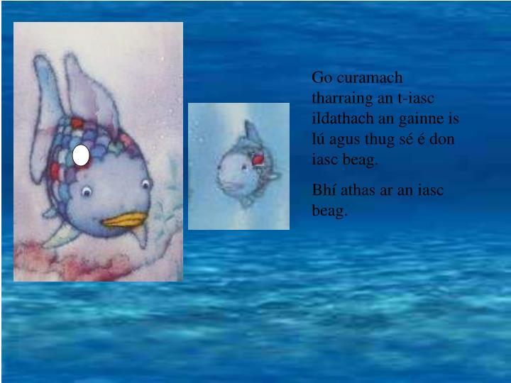 Go curamach tharraing an t-iasc ildathach an gainne is lú agus thug sé é don iasc beag.
