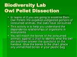 biodiversity lab owl pellet dissection