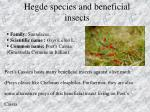 hegde species and beneficial insects