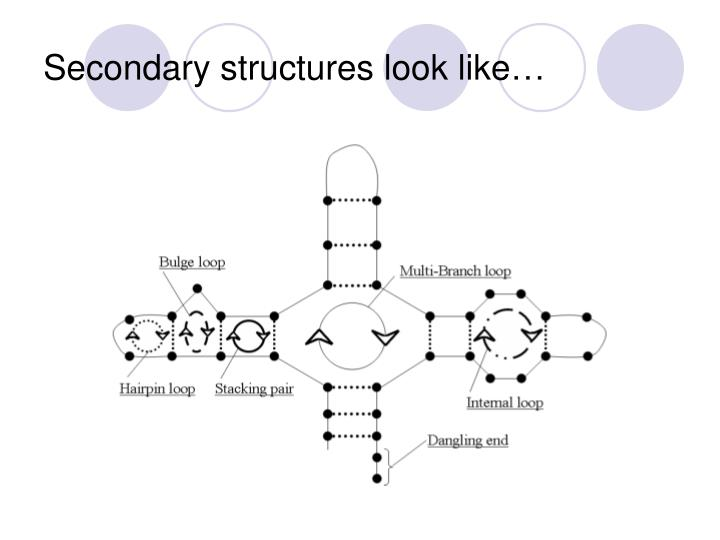 Secondary structures look like…