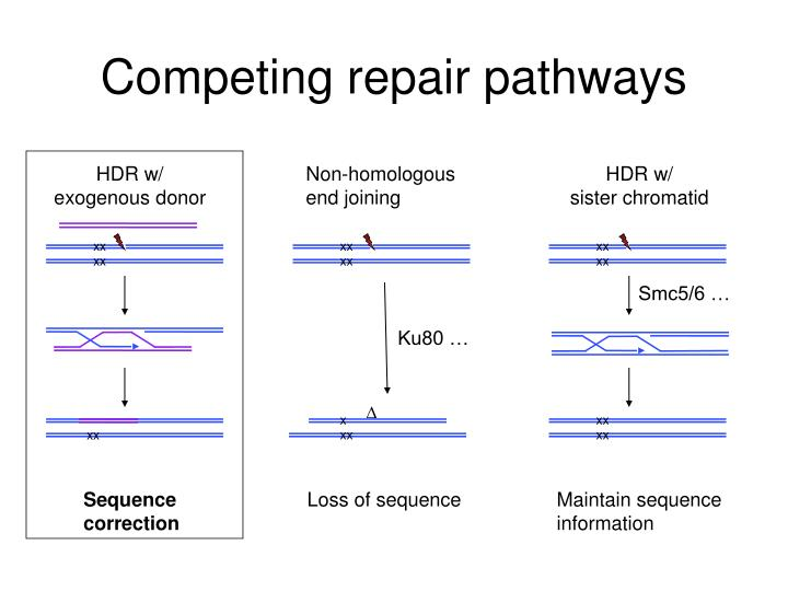 Competing repair pathways