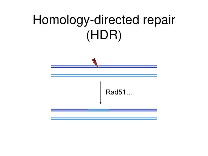 Homology-directed repair