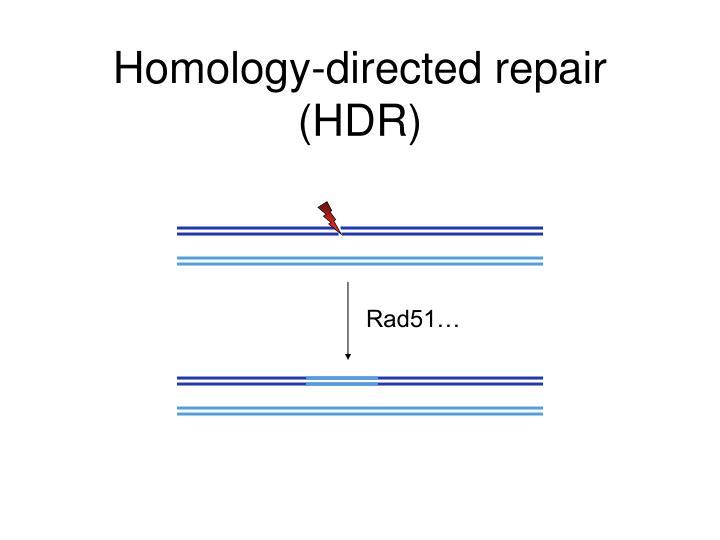 Homology-directed repair