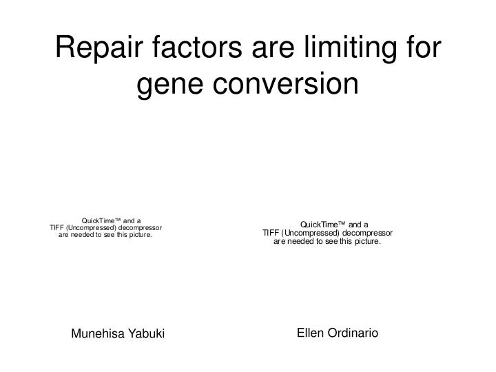 Repair factors are limiting for gene conversion