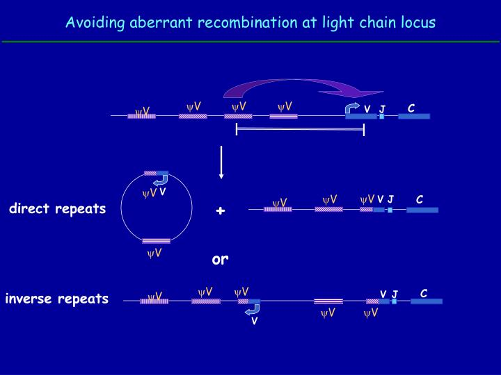 Avoiding aberrant recombination at light chain locus