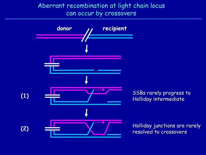 Aberrant recombination at light chain locus