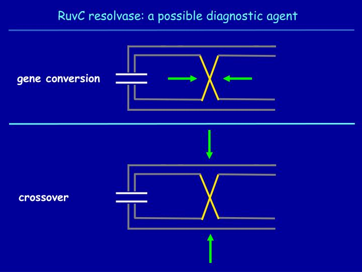 RuvC resolvase: a possible diagnostic agent