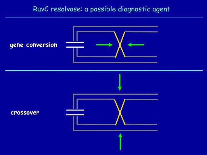 RuvC resolvase: a possible diagnostic agent