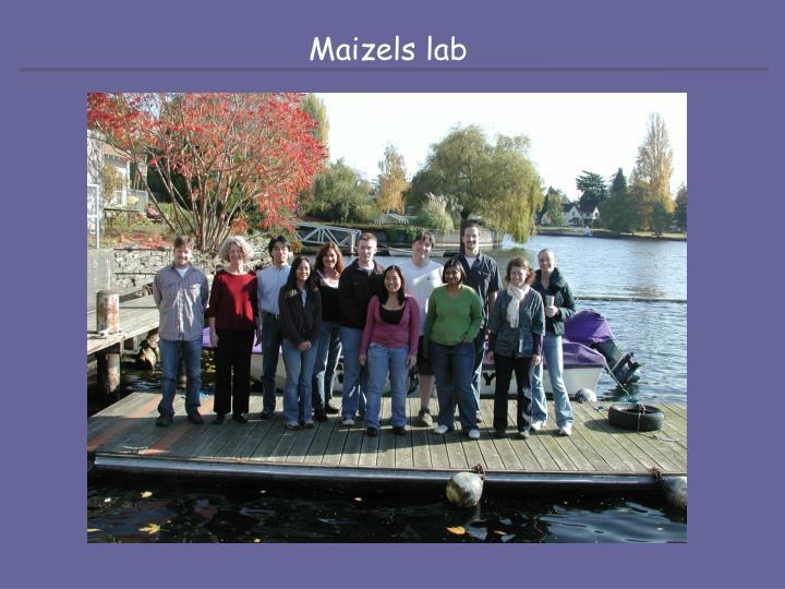 Maizels lab