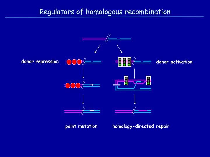 Regulators of homologous recombination