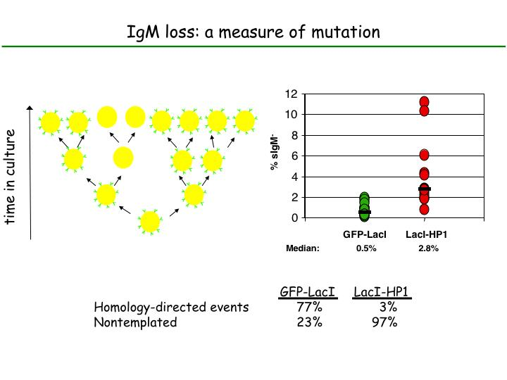 IgM loss: a measure of mutation