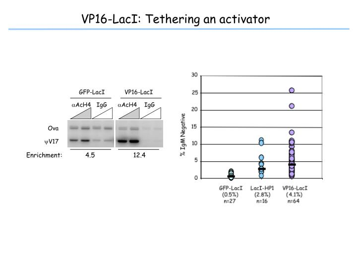 VP16-LacI: Tethering an activator