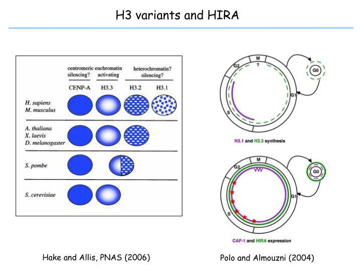 H3 variants and HIRA