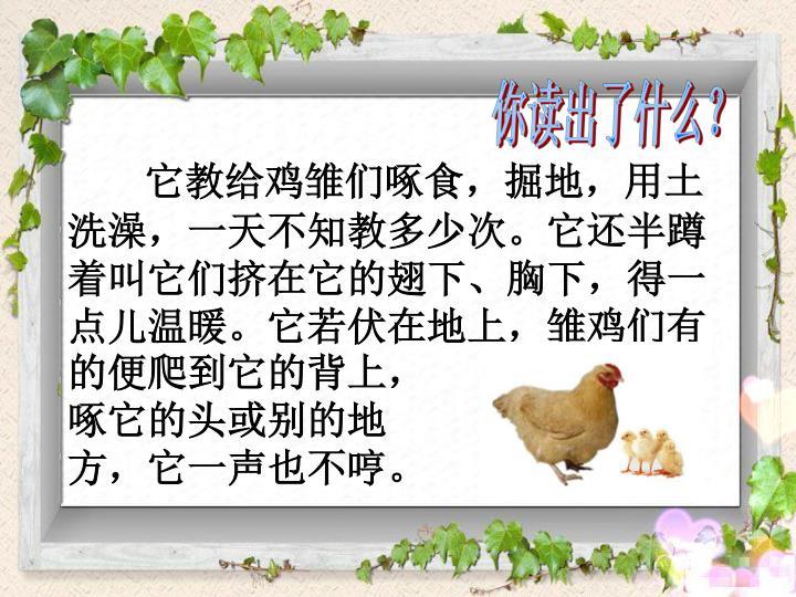 它教给鸡雏们啄食,掘地,用土洗澡,一天不知教多少次。它还