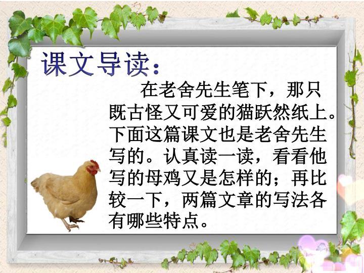 在老舍先生笔下,那只既古怪又可爱的猫跃然纸上。下面这篇课文也是老舍先生写的。认真读一读,看看他写的母鸡又是怎样的;再比较一下,两篇文章的写法各有哪些特点。