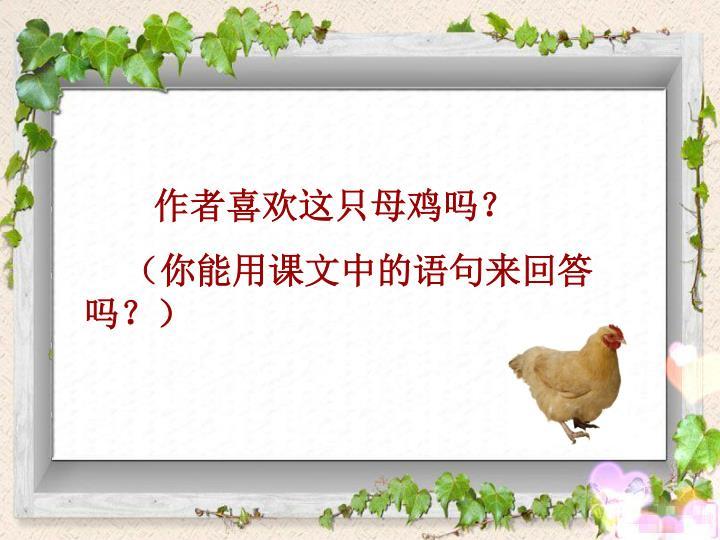 作者喜欢这只母鸡吗?