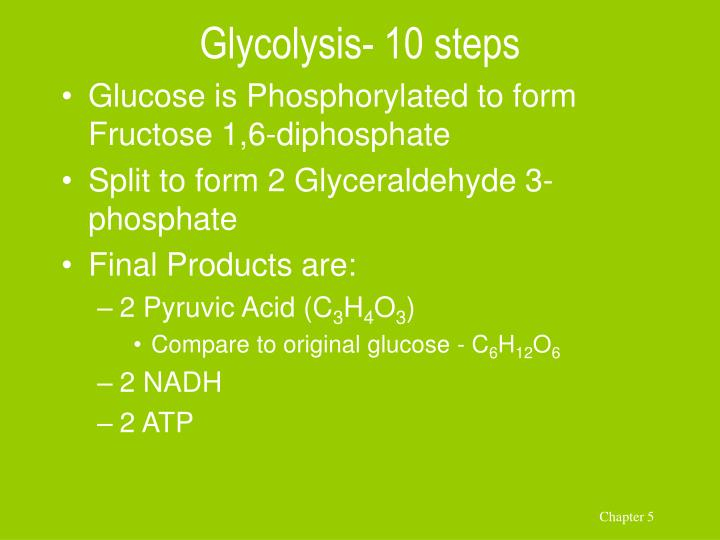 Glycolysis- 10 steps