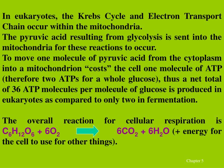 In eukaryotes, the Krebs Cycle and Electron Transport Chain occur within the mitochondria.