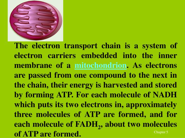 The electron transport chain is a system of electron carriers embedded into the inner membrane of a