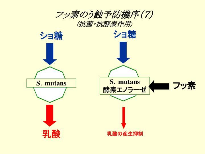 フッ素のう蝕予防機序(7)
