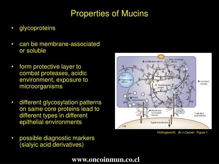 Properties of Mucins