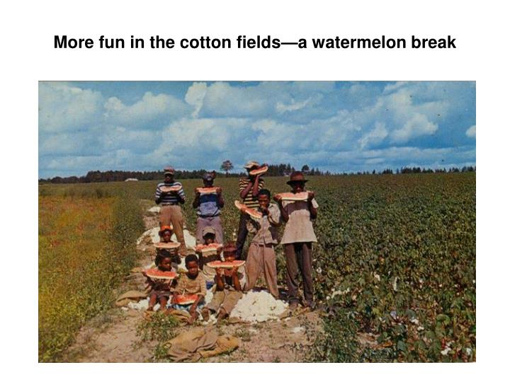 More fun in the cotton fields—a watermelon break