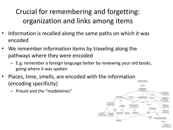 Crucial for remembering and forgetting: