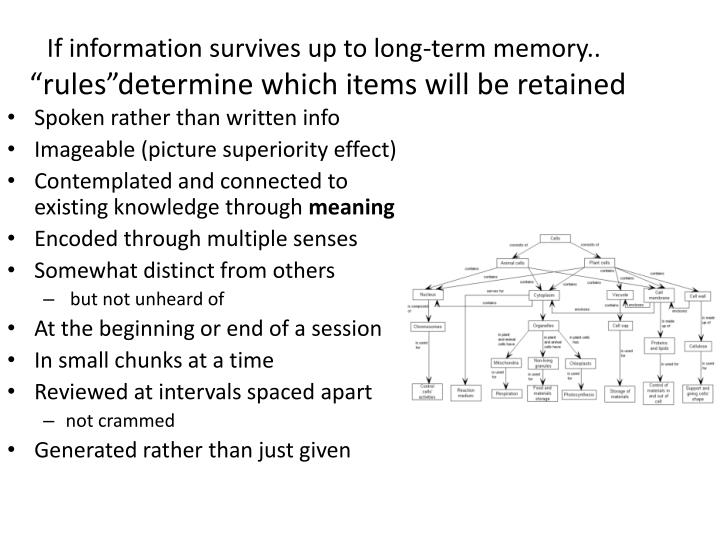 If information survives up to long-term memory..