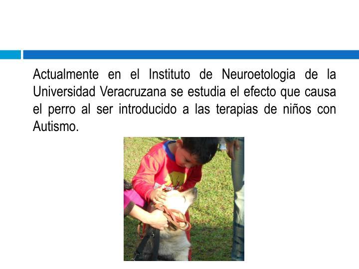 Actualmente en el Instituto de Neuroetologia de la  Universidad Veracruzana se estudia el efecto que causa el perro al ser introducido a las terapias de niños con Autismo.