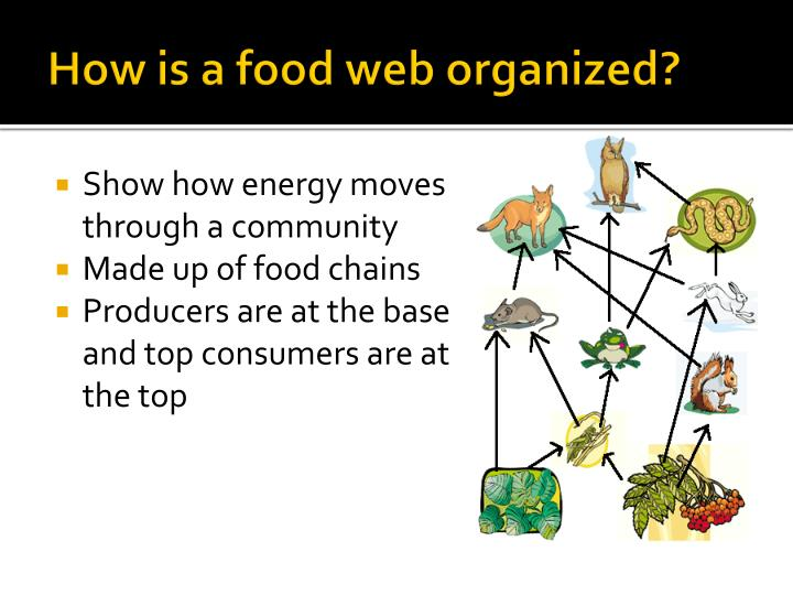 How is a food web organized?