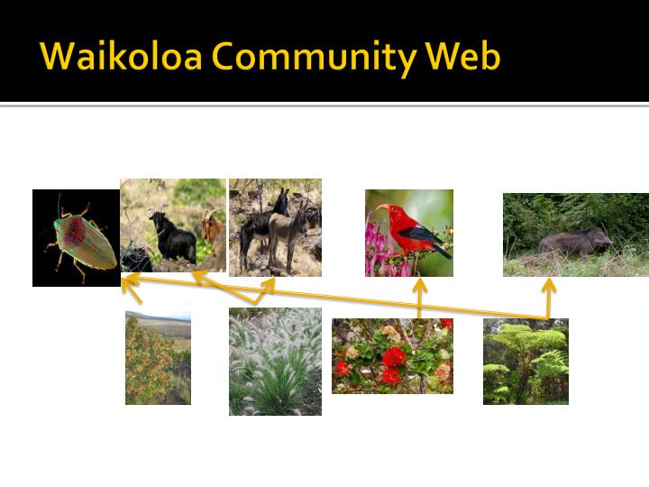 Waikoloa Community Web