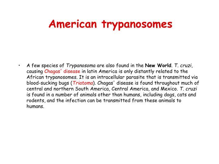 American trypanosomes