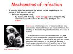 mechanisms of infection