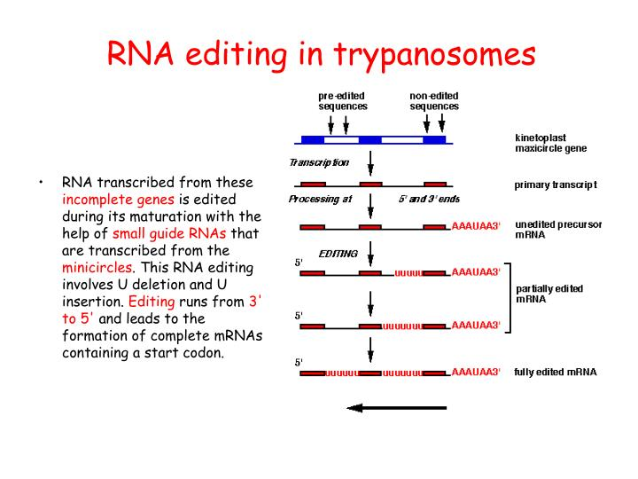 RNA editing in trypanosomes