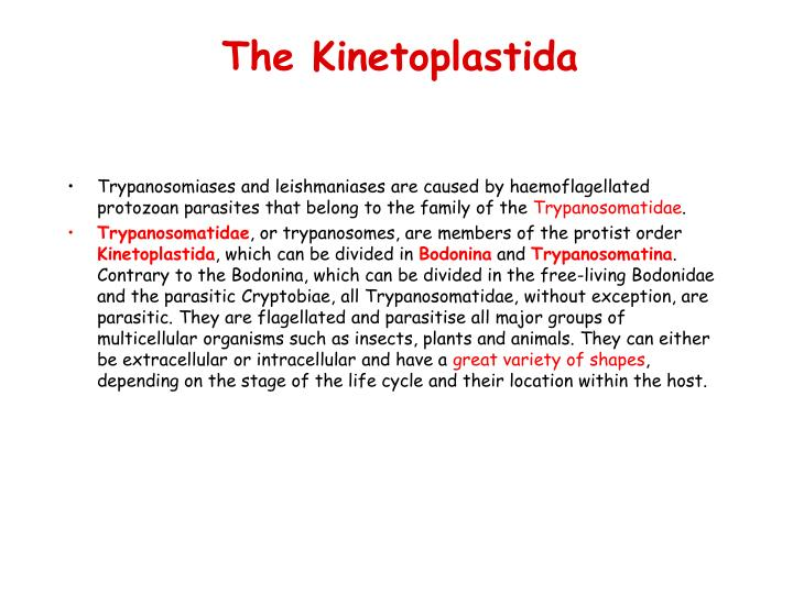 The Kinetoplastida