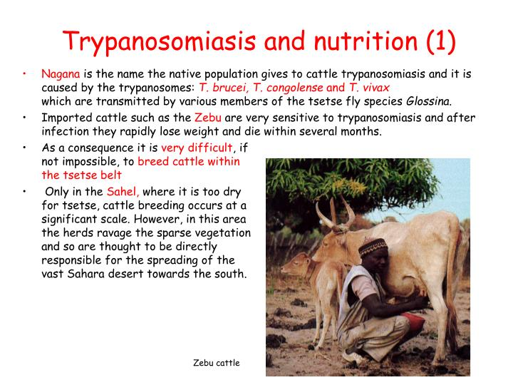 Trypanosomiasis and nutrition (1)