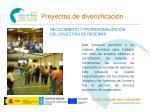 proyectos de diversificaci n1
